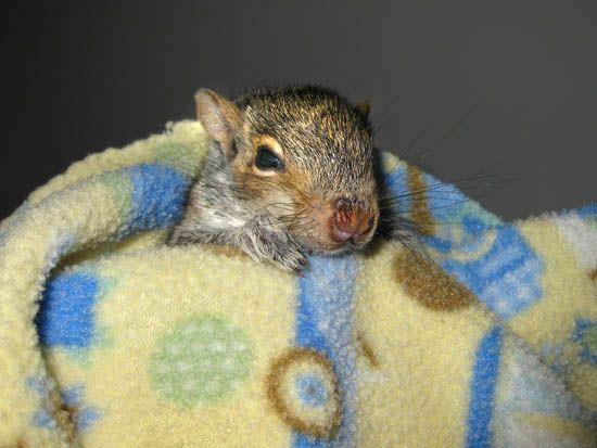 baby season squirrel