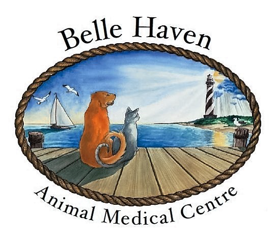 Belle Haven logo