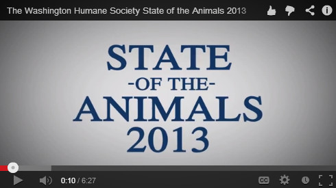 state of the animals video thumbnail image
