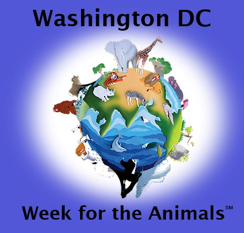 wash dc week logo.jpg